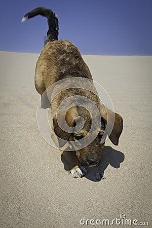 Puppy in sand