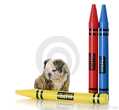 Puppy sitting with large crayons