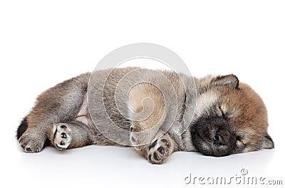 Puppy sleep on white background