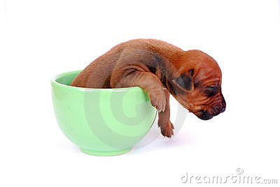 Puppy sleeping in a cup