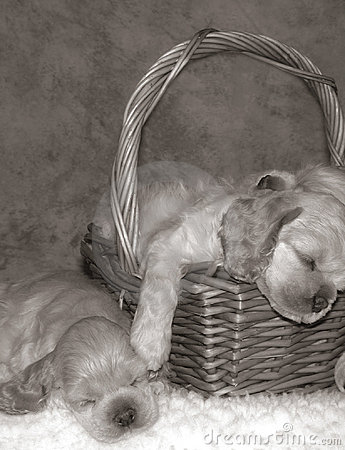Free Puppy Slumber Party Royalty Free Stock Photography - 442127