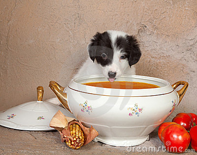 Puppy and soup