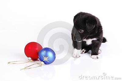 Puppy and two Christmas balls