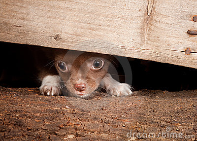 Puppy under a fence