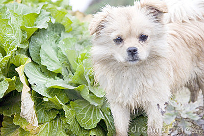 Puppy in a vegetable garden