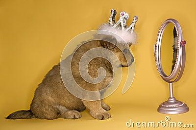 Puppy wearing crown.