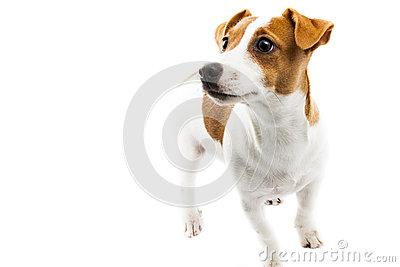 Puppy on white