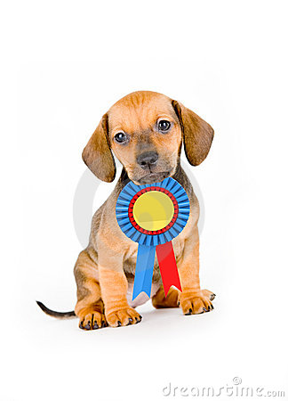 Free Puppy Winner Royalty Free Stock Images - 4747229