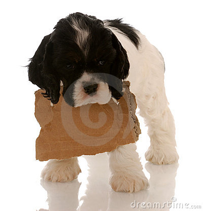 Free Puppy With Blank Sign Around Neck Royalty Free Stock Photos - 10501498
