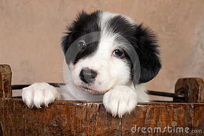 Puppy in a wooden bucket