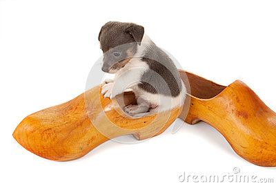 Puppy in a wooden shoe