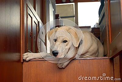 Puppy on yacht