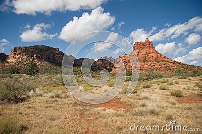 Pure Arizona
