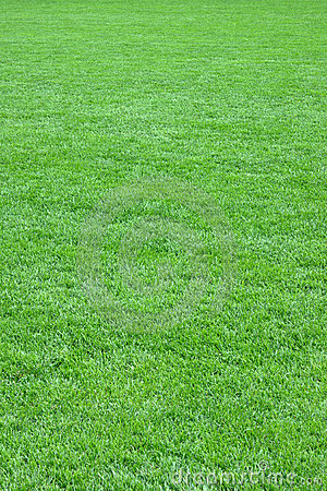 Free Pure Empty Green Grass Field Cut Stock Image - 6146291