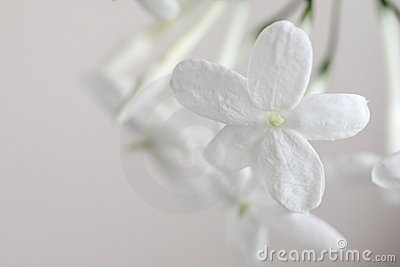 Pure fragrance