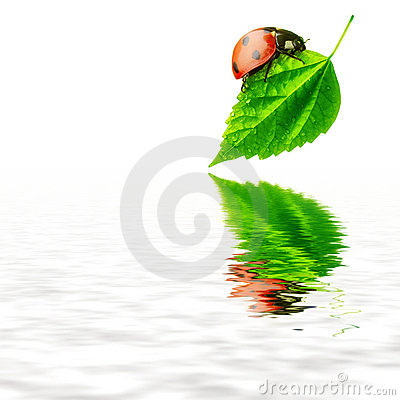 Pure nature concept - ladybird leaf and water