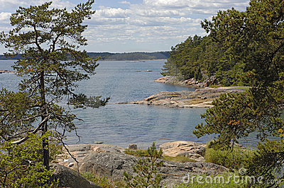 Pure nature in sweden