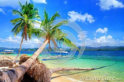 Pure tropics
