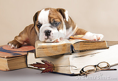 Purebred  puppy and book