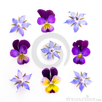 Free Purple And Blue Edible Flowers Stock Images - 75517514