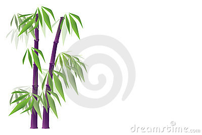 Purple bamboo