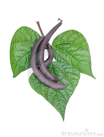 Purple beans with leaves
