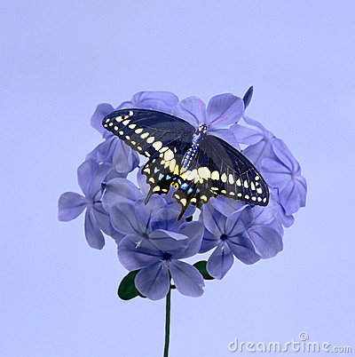 Purple Blossom and Butterfly
