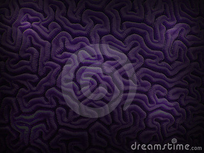 Purple Brain Coral from Caribbean Underwater
