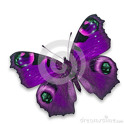Free Purple Butterfly Stock Photography - 46588732