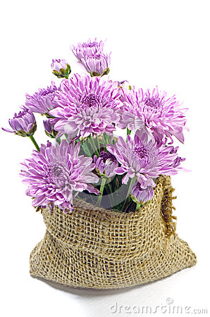 Free Purple Chrysanthemum. Royalty Free Stock Images - 40235779