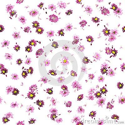 Free Purple Chrysanthemum And Daisy Buds Pattern Stock Photo - 58125140