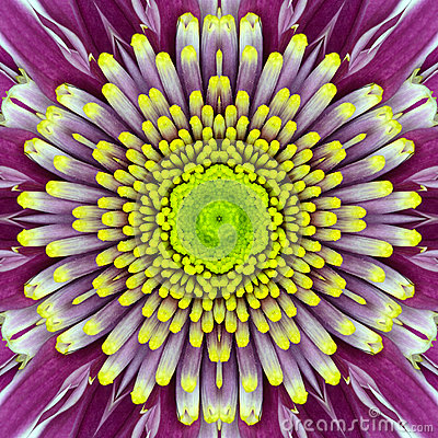 Free Purple Concentric Flower Center. Mandala Kaleidoscopic Design Stock Image - 35944861