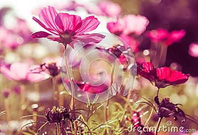summer flower retro sunshine - photo #20