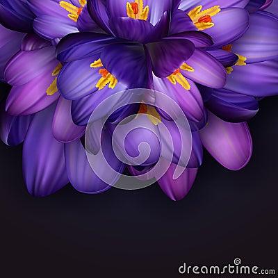Free Purple Crocus Flowers Stock Photos - 68151543