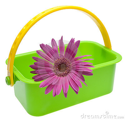 Purple Daisy in Green Basket