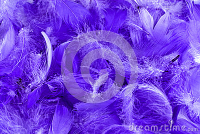 mauve feather background