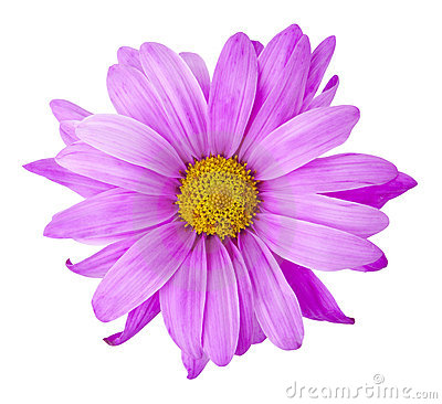 Free Purple Flower Stock Photo - 13468860