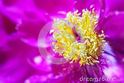 Purple flower abstract closeup