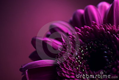 Purple Flower Composition 2.