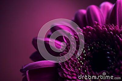 Purple Flower Composition 2.