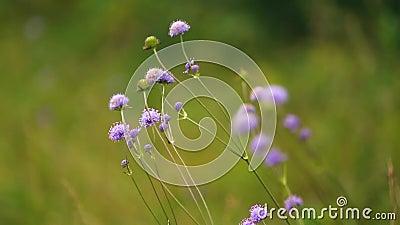 Purple Flower stock video footage