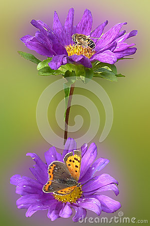 Purple flower with insects
