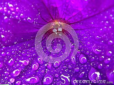 Purple Flower with Macro Water droplets