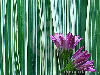 Purple Flower on Ribbon Grass