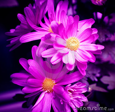 Free Purple Flowers Stock Photography - 2089832