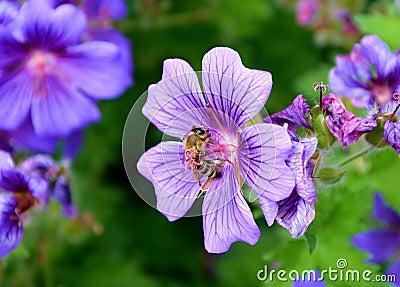 Purple Flowers Free Public Domain Cc0 Image