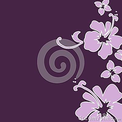 Free Purple Hibiscus Stock Images - 1204354