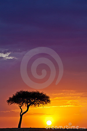 Free Purple In The Sky Stock Images - 20296254