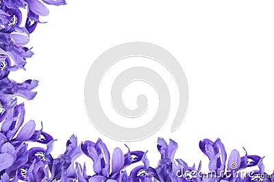 Purple Iris frame Stock Photo