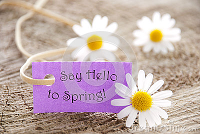 Purple Label With Life Quote Say Hello To Spring And Marguerite Blossoms Stock Photo